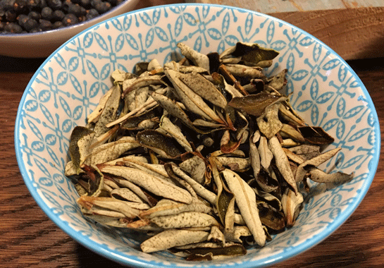 gin-sul-lackzistrose-botanical
